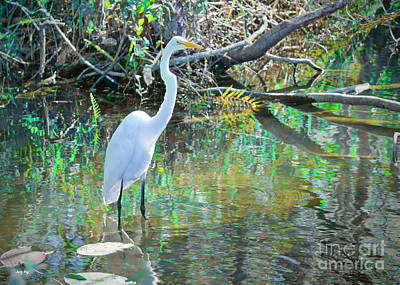 Wading For Lunch Art Print by Judy Kay