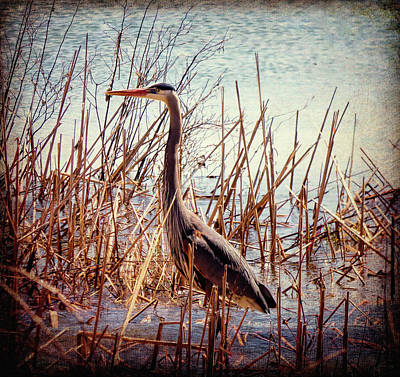 Photograph - Wading In The Reeds by Leslie Montgomery