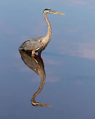 Photograph - Sky Wader by Art Cole