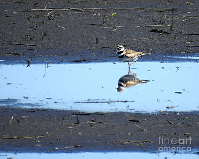 Photograph - Wading Killdeer by Kathy M Krause