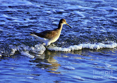 Photograph - Wading To Eat 2 by Lydia Holly
