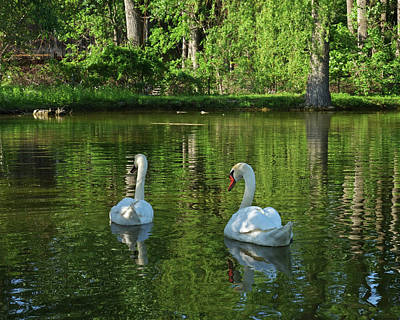 Photograph - Wagner Vinyard Estate Swans Finger Lakes Lodi Ny by Toby McGuire