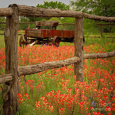 Wagon In Paintbrush - Texas Wildflowers Wagon Fence Landscape Flowers Print by Jon Holiday