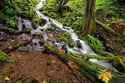 Photograph - Wahkeena Falls by Jonathan Davison