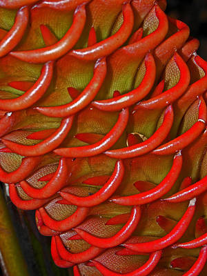 Photograph - Waimea Flowers IIi by Elizabeth Hoskinson