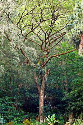 Photograph - Waimea Tree Study 1 by Robert Meyers-Lussier