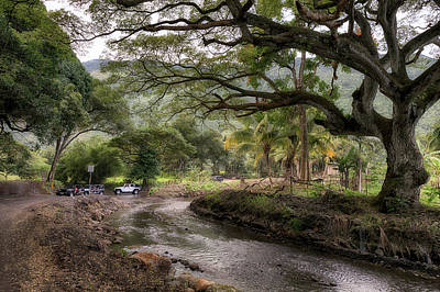 Photograph - Waipio Valley Traffic Jam by Susan Rissi Tregoning
