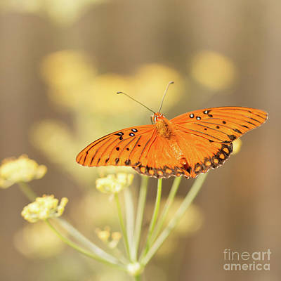 Fluttering Photograph - Wait Here by Ana V Ramirez