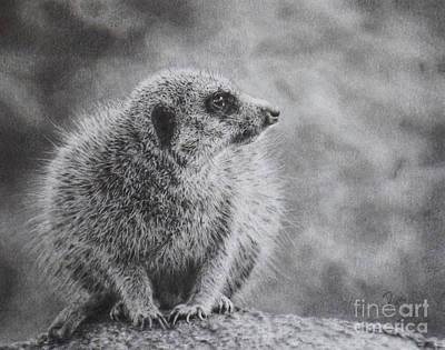 Meerkat Drawing - Wait by Ryn Hipp