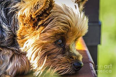 Photograph - Waiting Dog by Joann Long