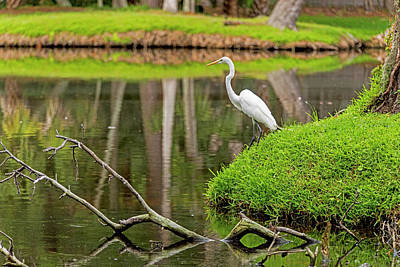 Photograph - Waiting Egret by Willie Harper