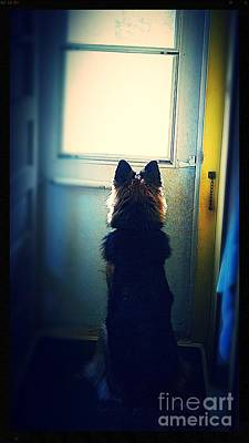 Frank J Casella Royalty-Free and Rights-Managed Images - Waiting For Her Walk by Frank J Casella