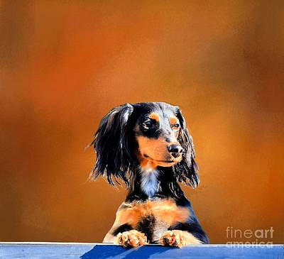 Photograph - Waiting For My Master by Janette Boyd