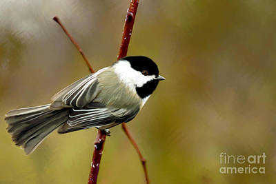 Blackcap Painting - Waiting For Spring  by Beve Brown-Clark Photography