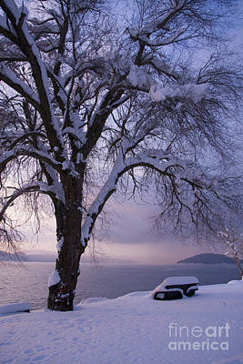 Photograph - Waiting For Spring by Idaho Scenic Images Linda Lantzy