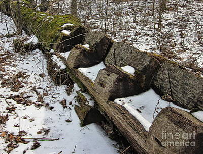 Photograph - Waiting For Spring by Kathie Chicoine