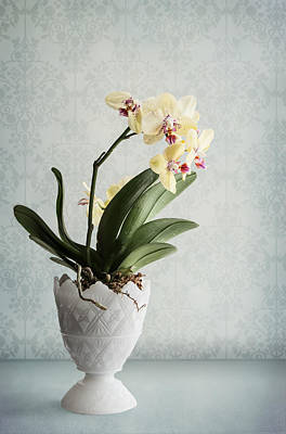 Indoor Still Life Photograph - Waiting For Spring by Maggie Terlecki