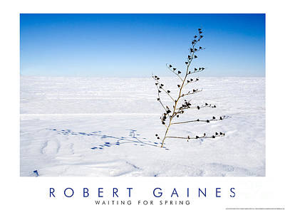 Photograph - Waiting For Spring by Robert Gaines