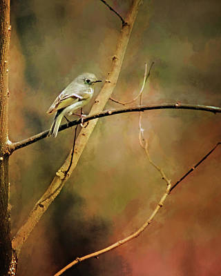 Photograph - Waiting For Spring - Ruby Crowned Kinglet by Nikolyn McDonald