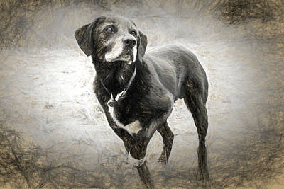 Animal Lover Digital Art - Waiting For The Ball by Olivia Elliot