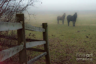 Photograph - Waiting For The Fog To Lift by Joann Long