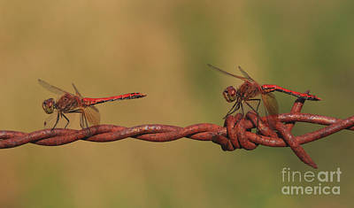 Dragonfly Photograph - Waiting For The Girls by Gary Wing