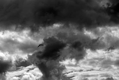 Photograph - Waiting For The Storm With Gull Bw by Mary Bedy