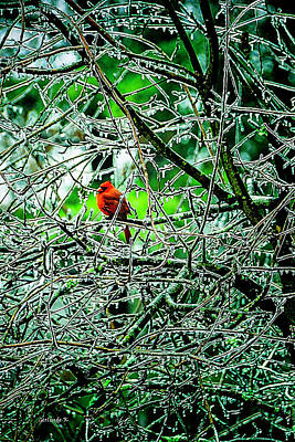 Waiting For The Thaw Art Print by Gerlinde Keating - Galleria GK Keating Associates Inc