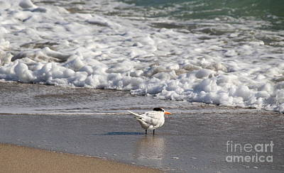 Photograph - Waiting For The Tide by Lennie Malvone