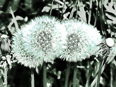 Dandelion Clock Digital Art - Waiting For The Wind  by Steve Taylor