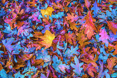 Photograph - Waiting For The Winter In Vivid Colors by Debra and Dave Vanderlaan