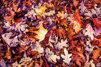Photograph - Waiting For The Winter Painterly Hot Tones by Debra and Dave Vanderlaan