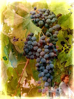 Purple Grapes Digital Art - Waiting For Wine by Dorothy Berry-Lound