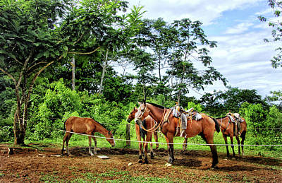 Photograph - Waiting Horses by Carolyn Derstine
