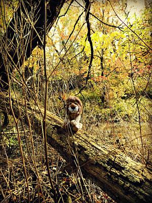 Photograph - Waiting On A Friend by Cyryn Fyrcyd