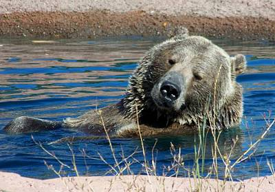 California Wildlife Photograph - Waiting On Lunch by Karen Wiles