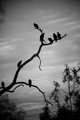 Vulture Digital Art - Waiting by Robert Meanor