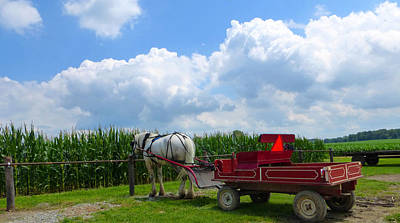 Amish Community Photograph - Waiting by Tina M Wenger