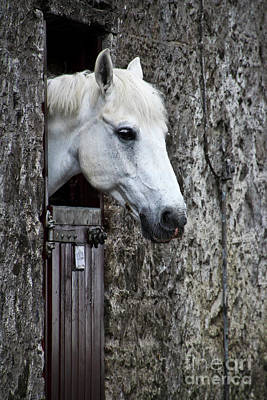 Photograph - Waiting To Ride by Joann Long
