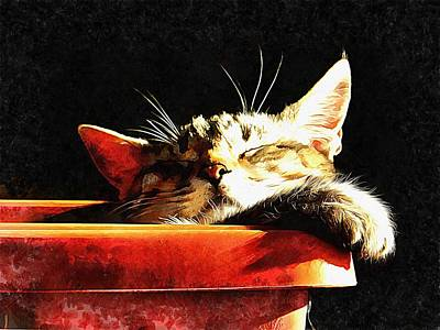 Photograph - Wake Me When It Is Dinner Time by Dorothy Berry-Lound