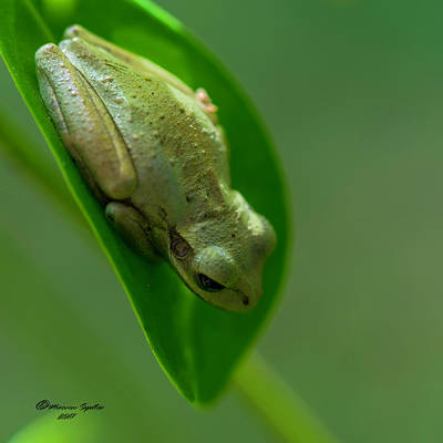 Hop Photograph - Wake Up Time by Marvin Spates