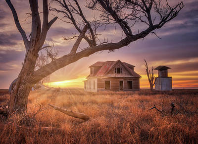 Photograph - Waking Up With A Friend by Darren White