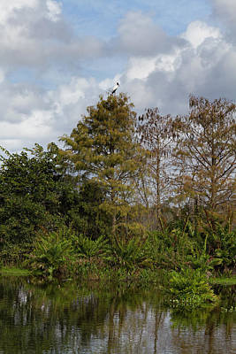 Photograph - Wakodahatchee Wetlands by Kim Hojnacki