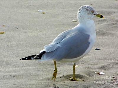 Photograph - Walk Away Gull by D Hackett