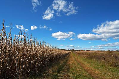 Photograph - Walk By The Corn Field by Elsa Marie Santoro
