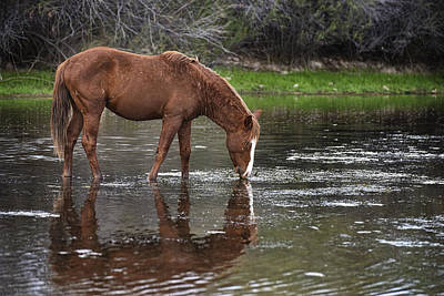 Photograph - Walk Horse In Salt River by Dave Dilli