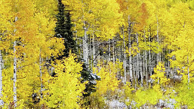 Framed Photograph - Walk In The Aspen Grove Large Canvas Art, Canvas Print, Large Art, Large Wall Decor, Home Decor by David Millenheft
