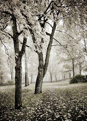 Soft Colors Photograph - Walk In The Park Encore  by Maggie Terlecki