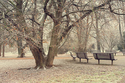 Photograph - Walk In The Snowy Old Park by Jenny Rainbow