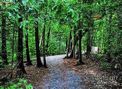 Photograph - Walk In The Woodlands by Gary Wonning